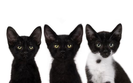 Wallpaper Three small black cat