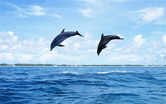 Wallpaper Two dolphins jumping