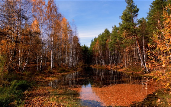 Wallpaper Autumn birch forest clear river