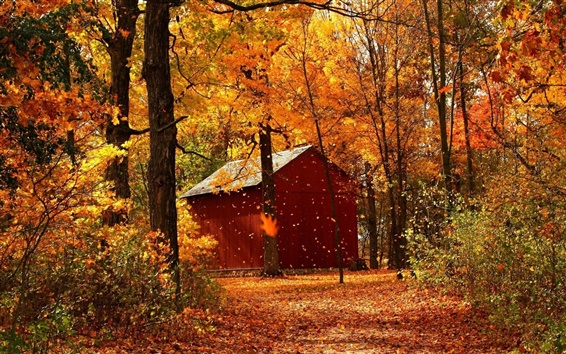 Wallpaper Autumn red maple forest cabins