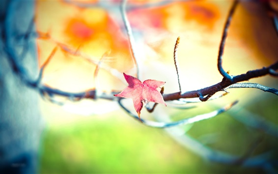 Обои Осеннее дерево красный кленовый лист крупным планом