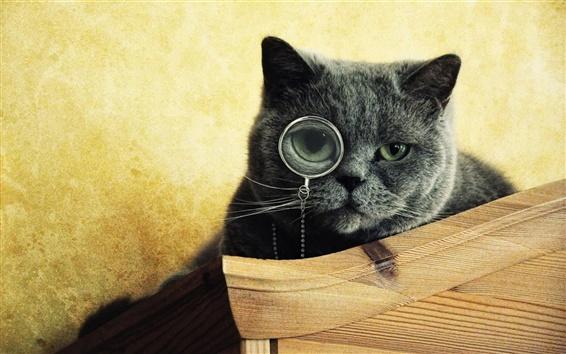 Fondos de pantalla Gafas Cat desgaste a la búsqueda de algo
