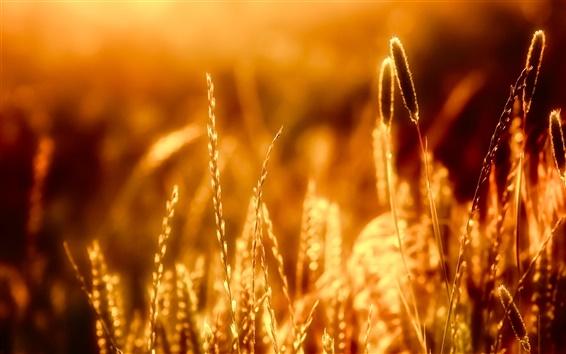 Fond d'écran Gros plan sur l'herbe dans la chaleur du soleil