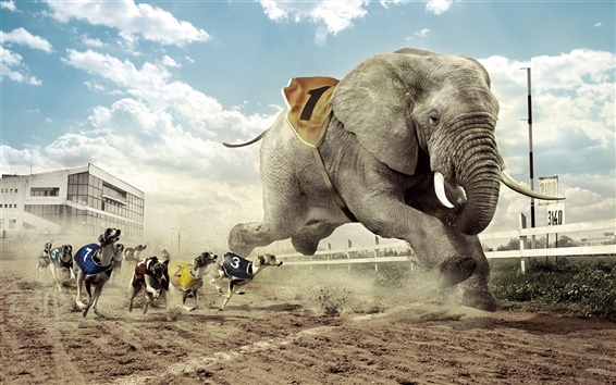 Wallpaper Creative design, dog and elephant race