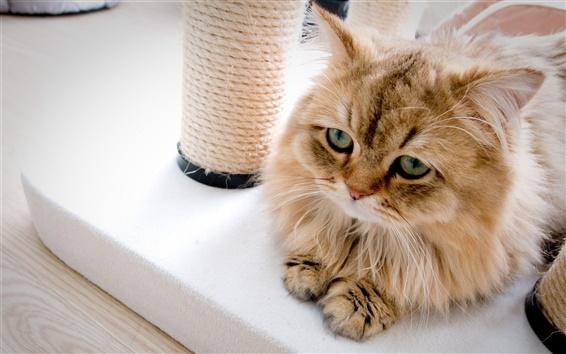 Wallpaper Cute little cat in the house
