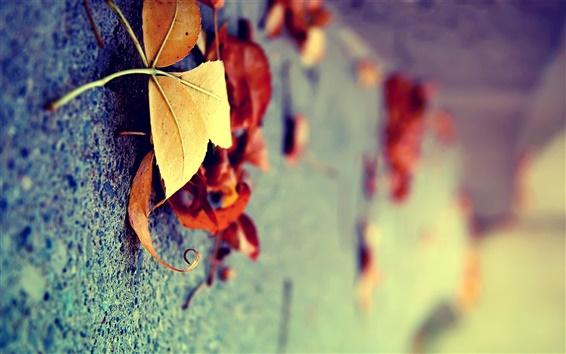 桌布 微距地面上的黃色樹葉在秋天