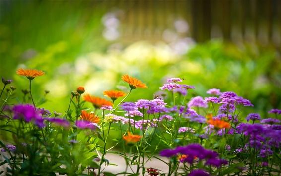 Papéis de Parede Fotografia macro de flores no jardim