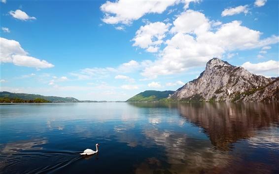 Papéis de Parede Lago de montanha paisagem, um cisne na água
