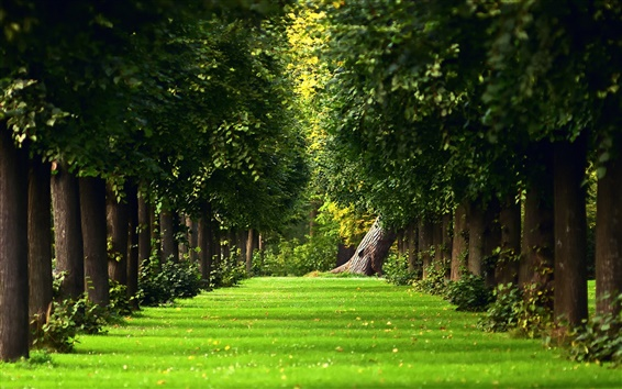 Wallpaper The natural summer forest green grass path