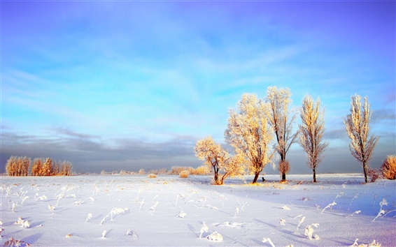 Wallpaper The thick snow of the winter wheat fields