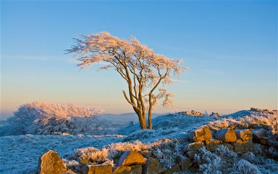 Fond d'écran Arbres d'hiver et de l'herbe, le soleil chaud