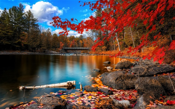 Wallpaper Autumn river, wooden bridge, woods and red leaves
