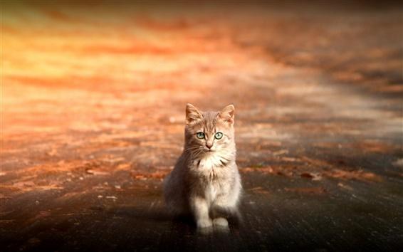배경 화면 고양이 눈, 거리 일몰