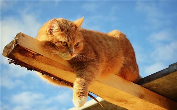 Papéis de Parede Gato que joga na madeira