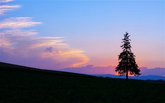 Обои Вечерний закат, горы и дерева силуэт