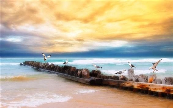 Wallpaper Sunset beach seagull