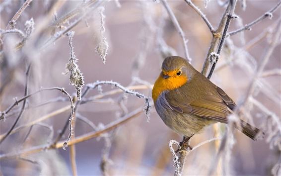 Wallpaper Bird in the cold winter