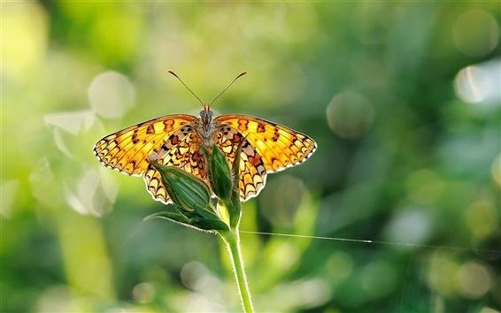 Wallpaper Butterfly wings, green plants, sunlight, close-up