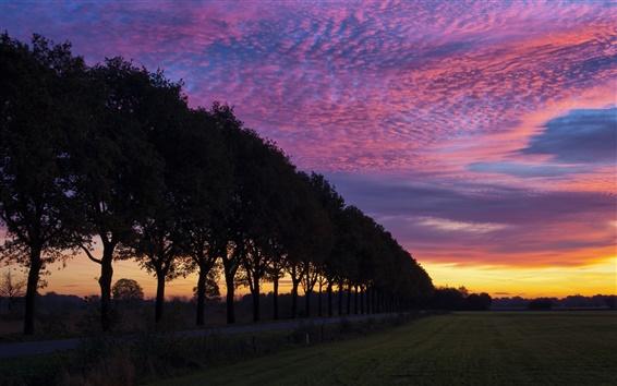 Обои Вечерний закат, силуэт дерева