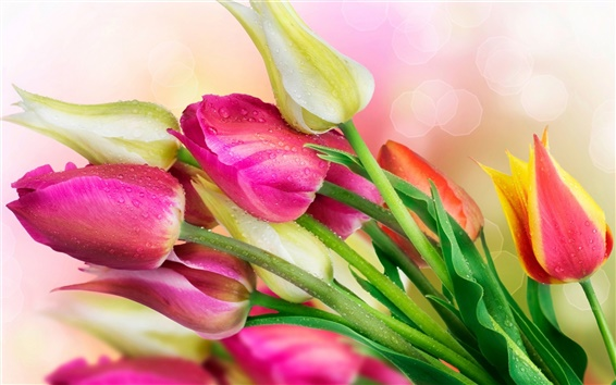 Wallpaper Flowers, tulips, water droplets