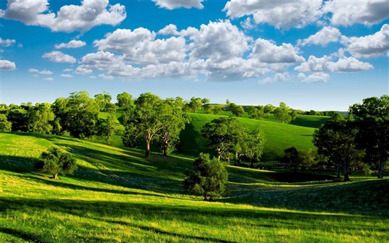 Wallpaper Green valley, nature scenery, blue sky, white clouds, trees, grasslands, sun