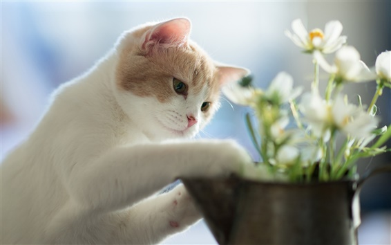 Wallpaper Kitten planting flowers