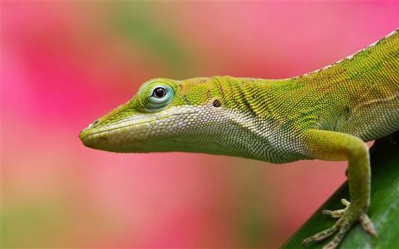 Wallpaper Lizard close-up, blurred background