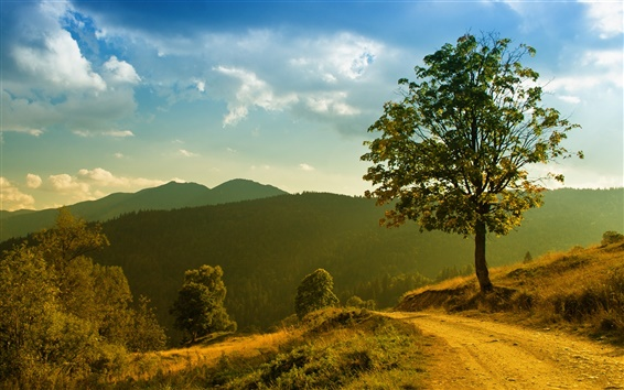 Wallpaper Mountain forest trees landscape, grass footpath, morning sun and clouds