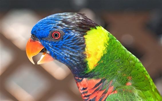Wallpaper Parrot close-up, blurred background