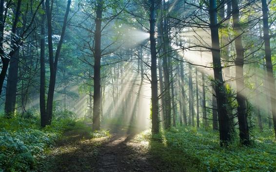 Wallpaper Summer morning, nature forest trail, sun light rays