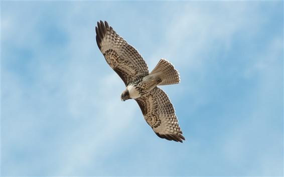 Обои Птицу, летящую в синем небе