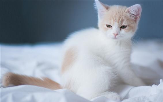 fonds d 39 cran un chaton mignon blanc hd image. Black Bedroom Furniture Sets. Home Design Ideas