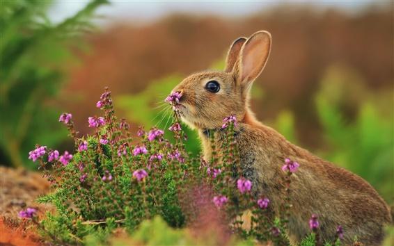 壁紙 クローズアップ動物、ウサギ、花、草