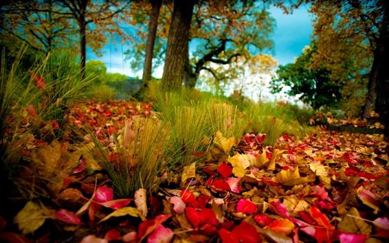 Fond d'écran Forêt d'automne, les feuilles d'automne sur l'herbe