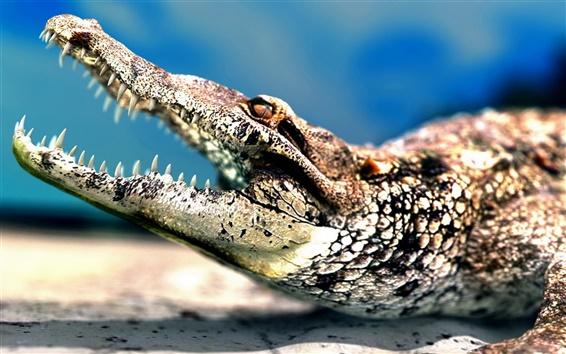 Wallpaper Big mouth crocodile sharp teeth