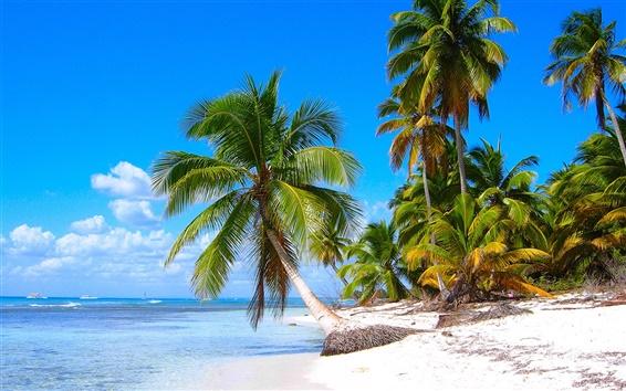 Wallpaper Caribbean shore scenery, sandy beaches, coconut trees, sea