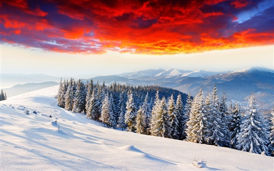 Wallpaper Cold winter, thick snow, sunrise glow, forest, mountains