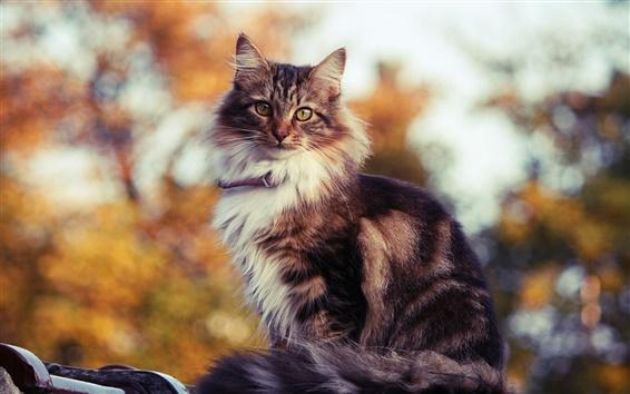Papéis de Parede Gato bonito no sol quente