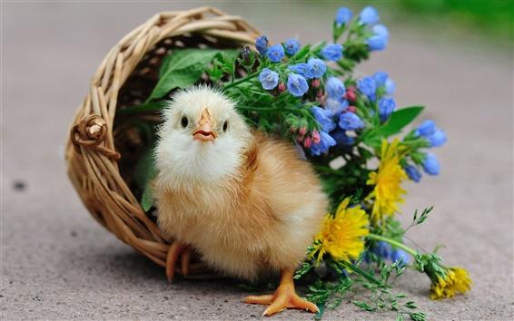 Fond d'écran Le poussin mignon, panier, fleurs