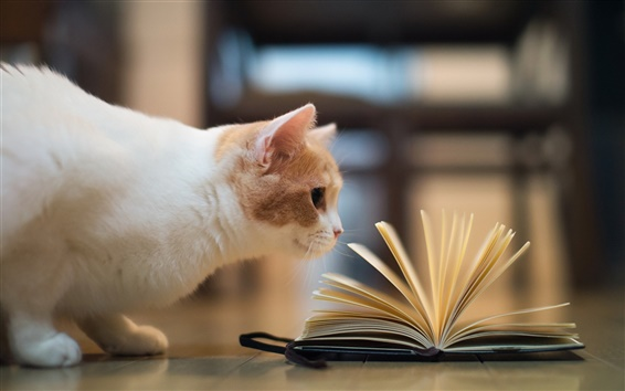 Wallpaper Humorous pictures, cat reading book