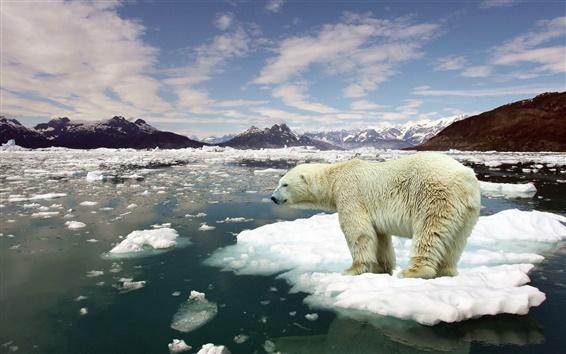 Fondos de pantalla Témpanos de hielo, agua de mar, deshielo polar, oso