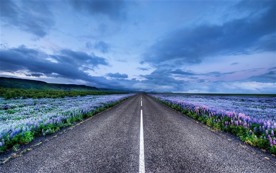 Wallpaper Iceland landscape, road, meadows, flowers, horizon, blue sky