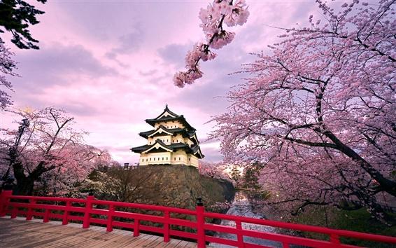 Обои Япония Hirosaki Castle, розовый цвет вишня