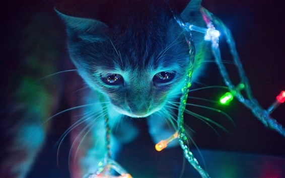Wallpaper Kitten and lights