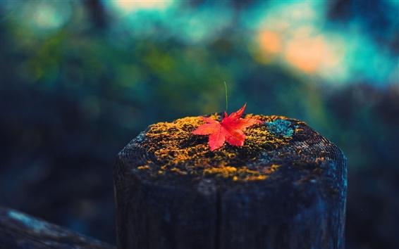 Wallpaper Maple leaf, tree stump, autumn
