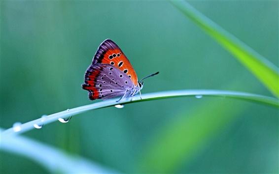 Обои Утренняя роса, бабочка, макро фотографии, нечеткие фоне