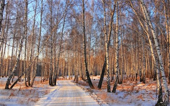 Wallpaper Snow winter, birch woods road