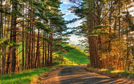 Wallpaper Warm afternoon landscape, trees, road, sunshine