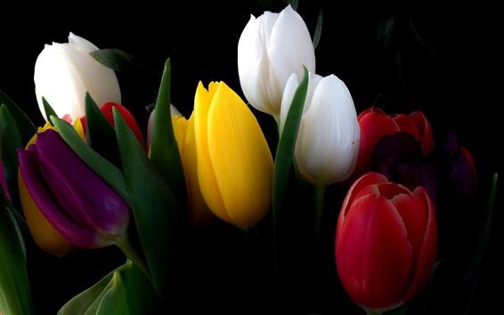Wallpaper White, yellow, red, tulip flowers