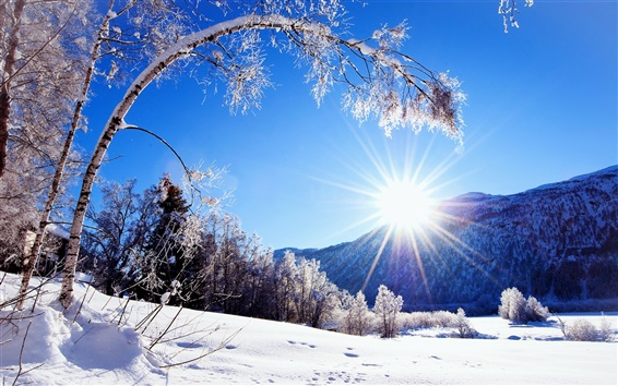 Wallpaper Winter, snow, mountains and trees, white scenery, dazzling sunshine